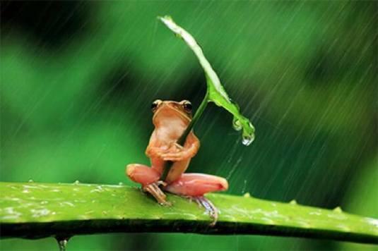 Frosch im Regen